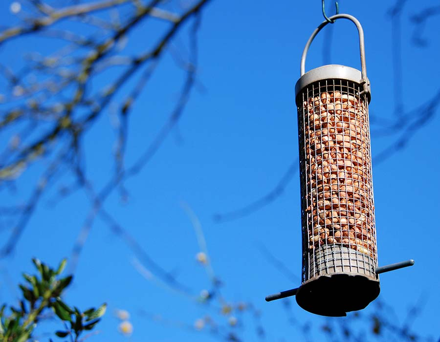 should you often bird feeders how feeder expensive refill empty