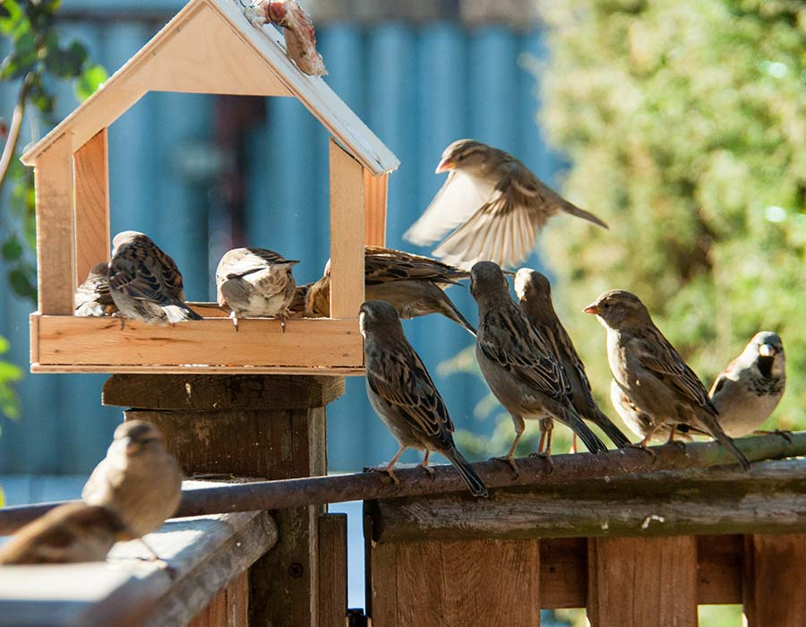 Best bird feeding hygiene happy beaks get enough bird food in your garden and youll have plenty of beaks happily pecking away but the more that do the greater the risk of diseases spreading solutioingenieria Image collections